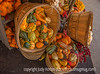 Display of Autumn Gourds