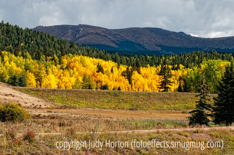 Not far from Divide, Colorado on the road to Cripple Creek in the autumn.  The aspens were as brilliant as I'd ever seen them.  Best viewed in the larger sizes