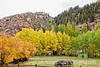 A Colorado autumn not far from Cripple Creek; best viewed in the larger sizes