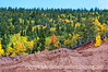 Autumn aspen in Colorado along the road to Cripple Creek; best viewed in the largest sizes