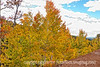 Aspen in autumn in Colorado along the road to Cripple Creek; best viewed in the largest size