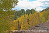 Aspen in autumn in Colorado along the road to Cripple Creek.  Best viewed in the largest sizes