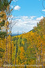 Autumn in Colorado; best viewed in the larger sizes