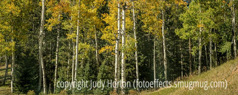Mueller State Park in Colorado, Autumn