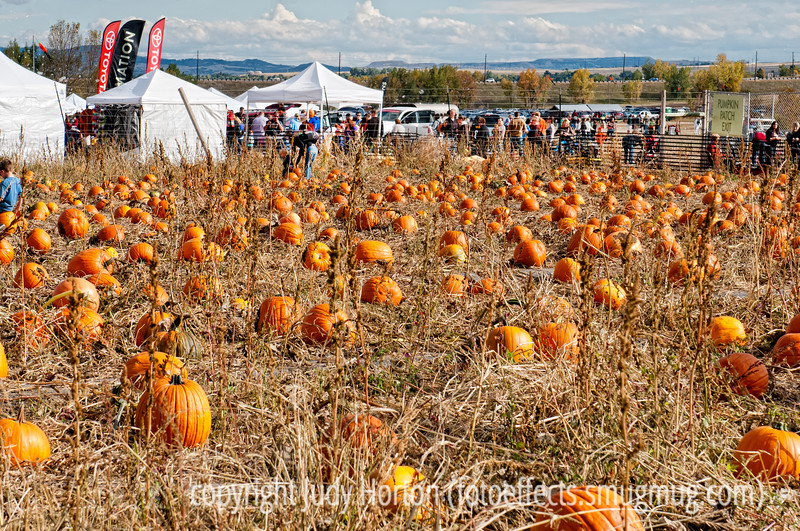 Pumpkin Festival at Chatfield Park in Denver; best viewed in the larger sizes