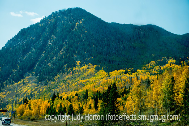 Aspen in autumn in Colorado; best viewed in larger sizes