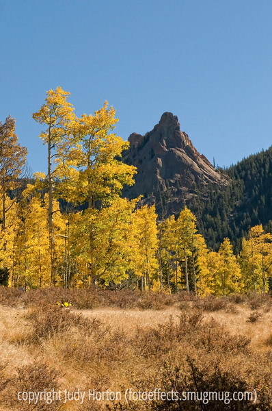Aspen along the trail to the Crags in Colorado; best viewed in the largest sizes