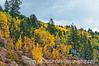 Aspen in autumn in Colorado