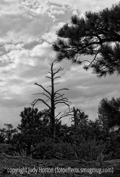 A dead tree stands against the sky at Castlewood State Park in Colorado