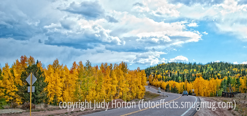 Aspen in autumn in Colorado along the road to Cripple Creek; best viewed in the larger sizes