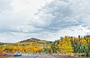 Aspen in autumn in Colorado along the road to Cripple Creek; best viewed in the largest sizes