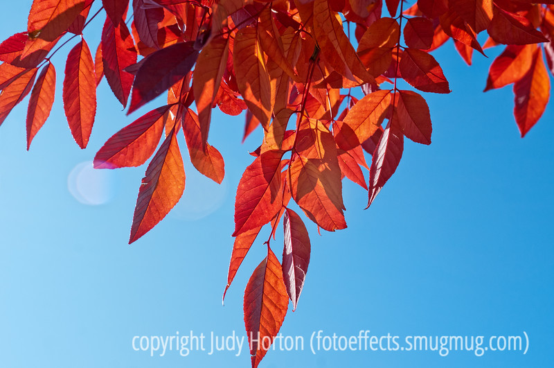 Autumn leaves and autumn light; best viewed in the largest sizes