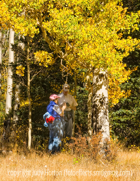 A couple checks the photos they've taken of the aspens in autumn