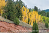 Aspen in autumn along the road to Cripple Creek, Colorado; best viewed in the largest sizes