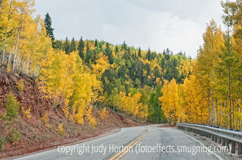 Aspen in Colorado in autumn; best viewed in the larger sizes