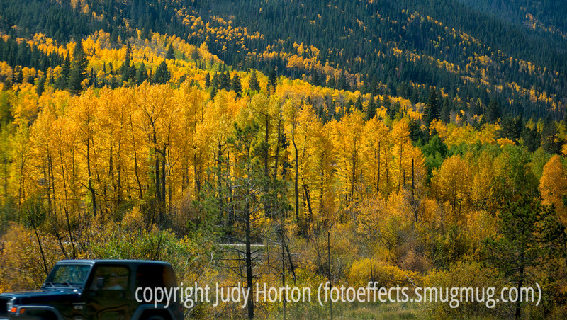 Aspen in autumn along I-70 west of Denver