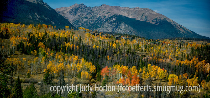 Aspen in Colorado in autumn along I-70