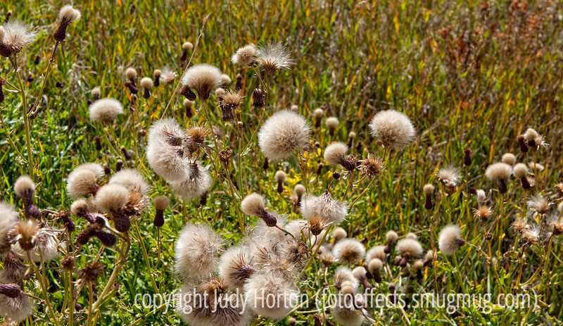 I was really amazed at the detail and dof I achieved on this shot of some seedheads in autumn; really MUST be viewed in the largest possible size to see this detail.