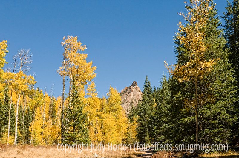 Aspens display their fall color along the trail to the Crags in Colorado; best viewed in the larger sizes