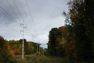 Power line meadow