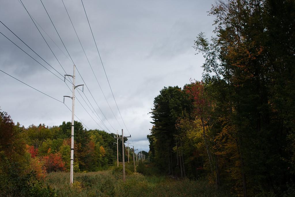 Power line meadow