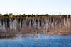 Lifeless trees in water