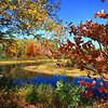 Autumn, a Rainbow of Colors