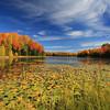 """""""Colorful Autumn"""""""