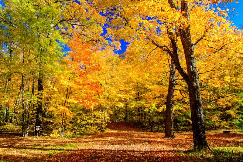 Autumns Prize