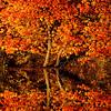 Autumn Jigsaw Puzzle 2014