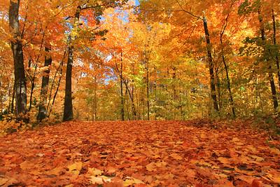 Autumns Fallen Leaves