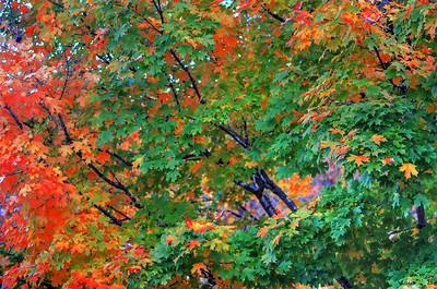 autumn ingredients - original