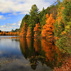 Tamaracks of October