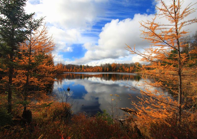 """  October's Golden Rewards   "" Golden Tamaracks of Autumn"