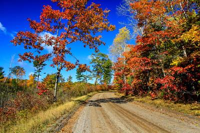 Autumn's Colorful Roads  4