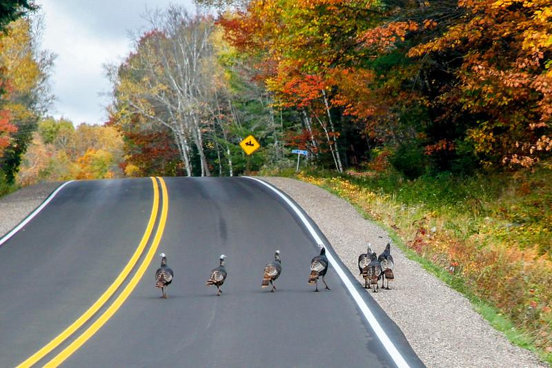 Beautiful Autumn Roads - Hwy B 5