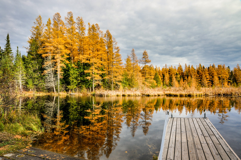 Golden Tamaracks at the High Lake Boat Landing 2