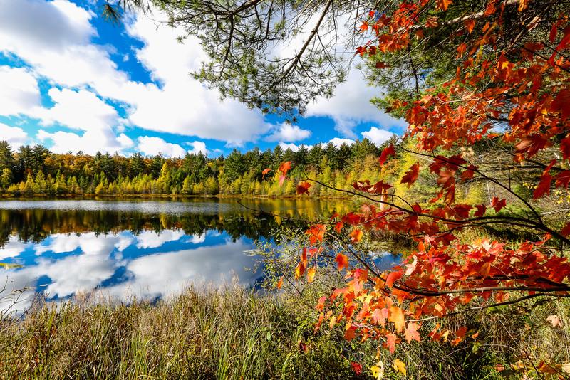 Eye Popping Autumn