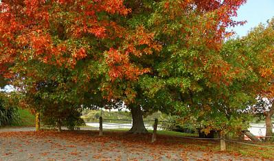 Autumn next to lake Karapiro in New Zealand.