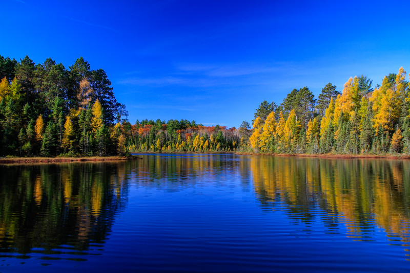 Tamaracks at Blueberry Lake