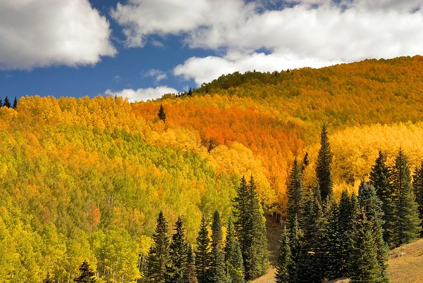 A multicolored autumn hillside on the way to Moonshine Park, near Ridgway, Colorado