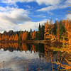 """Tamaracks of Autumn"""