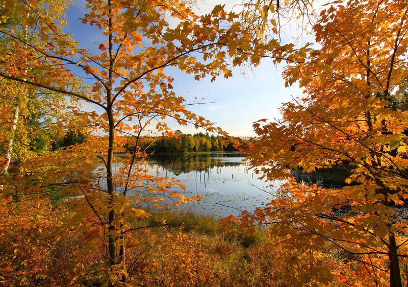 """""""  Autumn Splender """""""