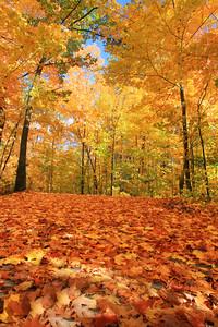 Autumns Fallen Leaves 2