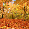 Autumns Fallen Leaves 2