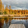 Golden Tamaracks at the High Lake Boat Landing 1