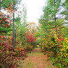 Our Colorful Autumn Trails 2