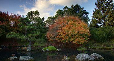 Japanese garden in autumn.  Hamilton Gardens, New Zealand
