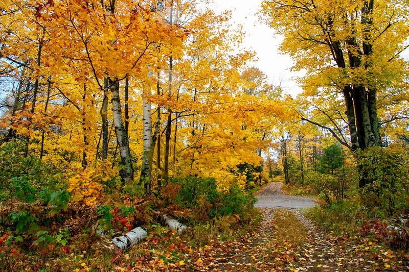 Golden Landscape at Nebish Lake