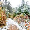 Early October Snow 2